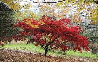 Batsford Arboretum